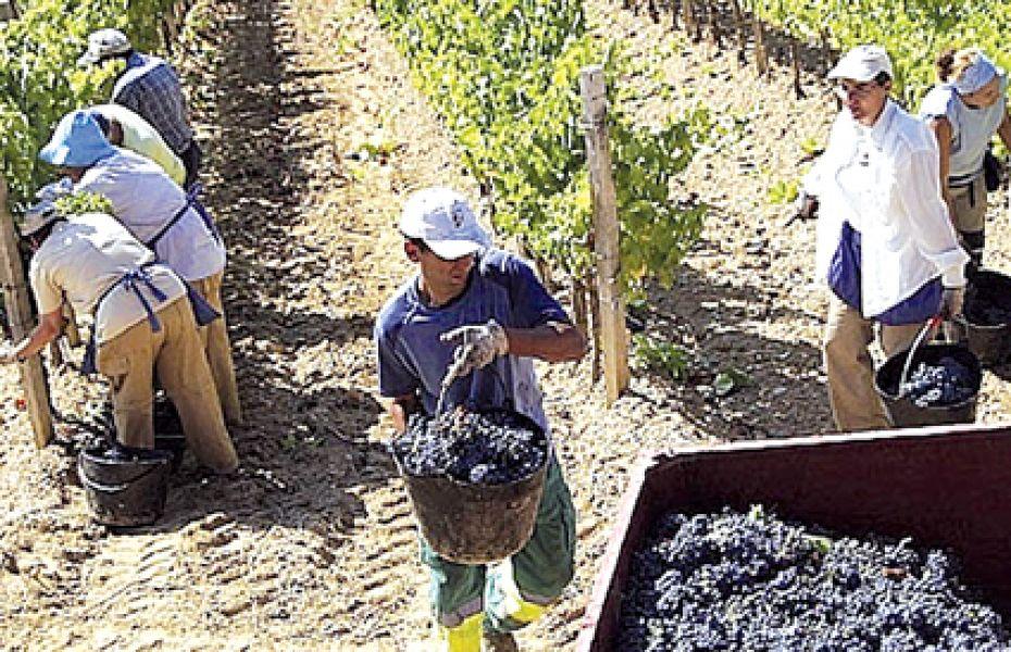 Trabajadores del vino del Grupo Peñaflor afrontan un conflicto gremial por despidos y reivindicaciones laborales.