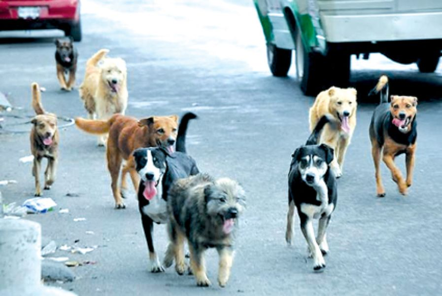 Estiman que hay 350 mil perros callejeros en toda la provincia.
