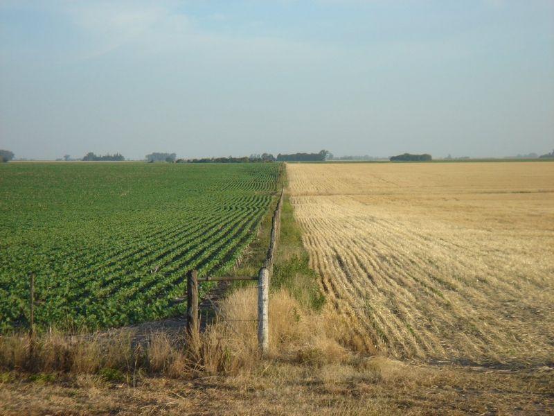 El sector agropecuario podría llegar a pagar un 10% por retenciones