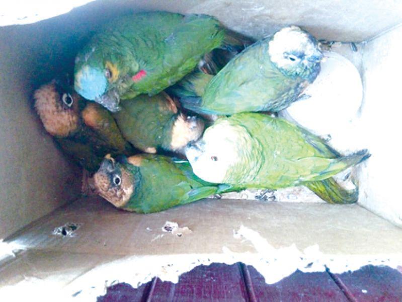 Loros y catas secuestrados y luego liberados en el norte, en un operativo ambiental. También se encontraron armas de caza.