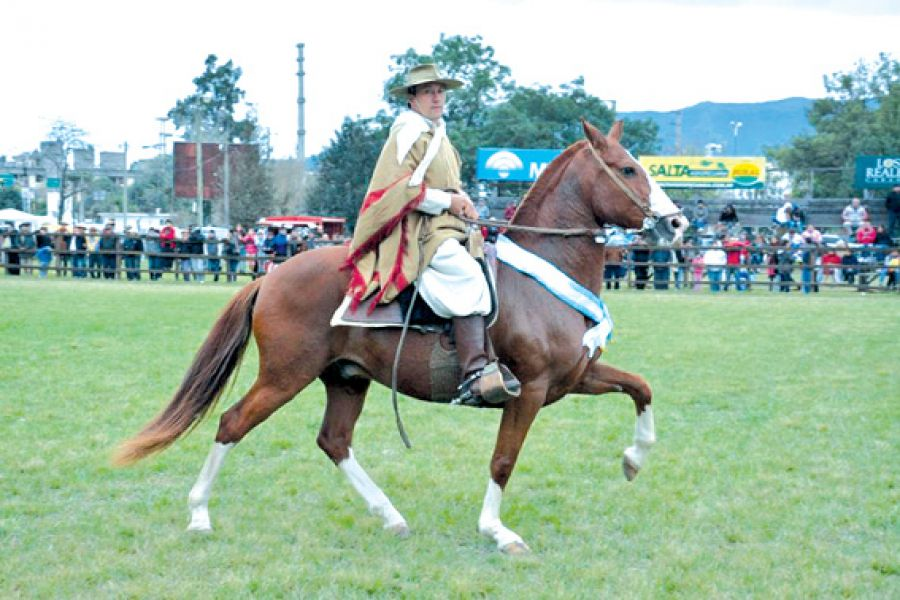 Los mejores exponetes equinos del país compiten en el predio de la Rural salteña.