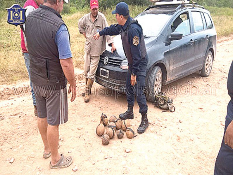 """Los quirquinchos """"bola"""" rescatados de depredadores. Su caza para la venta o el consumo es ilegal, están protegidos por ley."""