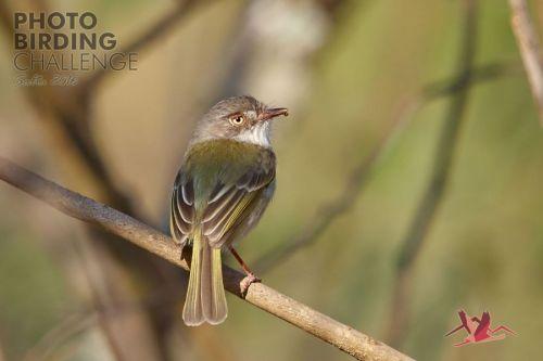 Concurso y safari fotográfico de aves de tres días en Salta del 8 al 11 de diciembre.