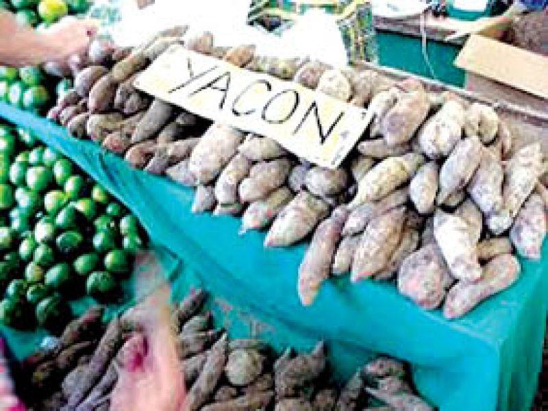 En Salta el yacón un cultivo que  va creciendo.