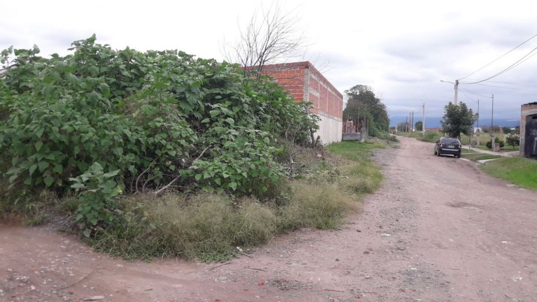 El baldío motivo de quejas de vecinos, se encuentra entre las manzanas 540 B y 540 C del barrio Ampliación Los Ceibos.
